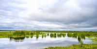 Wetland at edge of Upper Myakka Lake in Myakks River State P{ark in Sarasota Florida USA.