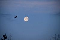 Marchâ. . s full Moon goes by the name Worm Moon, which was originally thought to refer to the earthworms that appear as the soil warms in spring. Thi...