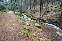 Path, pines, rocks with moss and stream in Sierra de Guadarrama. Madrid. Spain. Europe.