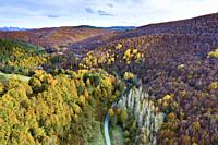 Aerial view of a decidual forest and road in autumn. Close to Irati area. Navarre, Spain, Europe.