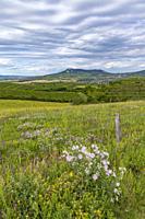 Palava landscape near Dolni Dunajovice, Southern Moravia, Czech Republic.