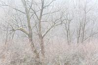 Frost covered woodland in Turiec region, Slovakia.
