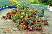 cactus pots on the roof, Blanes, Catalonia, Spain