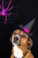 Cute Halloween pet portrait.