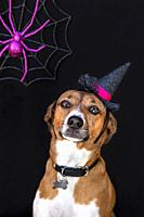 Sweet Halloween dog portrait.