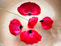 One poppy and four red poppy petals on golden background.