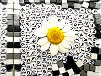 Daisy over black alphabet letters on white background and white, black and gray wooden squares.
