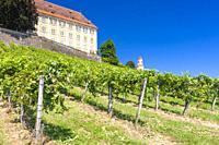Castle Stainz and vineyard, Styria, Austria.