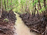 Mangrove lined tidal creek near Darwin in the Northern Territory of Australia on a rainy day.