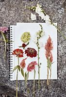 Some wild flower cuttings on a white paper on a rock.