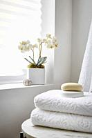 An orchid in the corner of a spa, an all-white room.