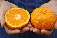 Gold nugget tangerines.