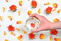 A Glass Round Lens ball and Roses reflexion in studio.