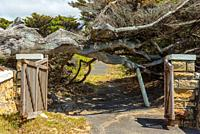 Old brownstone gates to a cemetery on the False Bay coast near Cape Town, The trees, originally bent by the prevailing South-East wind have now been b...