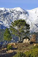 France, Corsica, Haute-Corse, Vizzavona pass in winter.