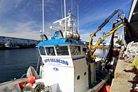 Purse-seine fishing. Sardines (Sardina pilchardus). Horse mackerel (Trachurus trachurus). Mackerel (Scomber scombrus). Chub mackerel (Scomber japonicu...