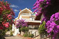 View to the bougainvilleas and the traditional wooden houses in Kinaliada island, Princes' Islands, Istanbul, Marmara Region, Turkey, Europe.