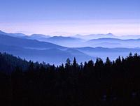 sequoia national park California USA.
