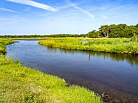 Myakka River in Myakka River State Park in Sarasota Florida USA.