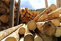 Construction timber in a sawmill in the Palatinate, Germany. Timber prices have almost tripled compared to the previous year.