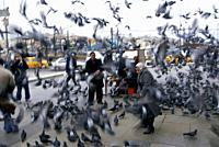 Traveling around Istanbul. Pigeons flying around people in a square.