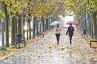 Autumn and rain in Almansa. Albacete