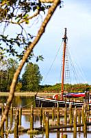 Forward portion of the sailing vessel Providence framed by a tree branch along the Steveston waterfront in British Columbia Canada.