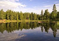 Trees reflecting in a lake near the Swedish village Annaboda in the Kilsbergen region.