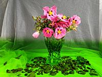 Glass vase with pink rockrose flowers on a white background and green base.