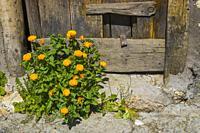 Flowers by an old wooden door.