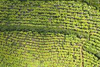 Aerial view of a tobacco plantation in Yunnan, China.