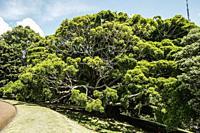 Trees in Albert Park. Auckland, North Island, New Zealand.