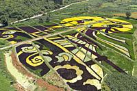 Aerial view of colored rice fields in Yiliang county, Yunnan - China.