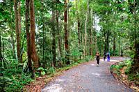 People jogging in the forest park, Sri maha Mariamman Temple, Mount Matang, Kuching, Sarawak.