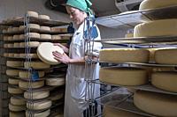 Elena at work, controlling the ripening process. Cheese shop, Formatgeria Mas d´Eroles, artisan cheese making, Adrall village, Alt Urgell, Lleida, Cat...
