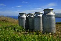 Milk urns in a dairy farm. Azores islands, Portugal.