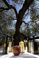centennial olive oil tasting. Traiguera. Maestrazgo region. Castellón. Spain.