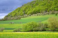 Swabian highlands in spring with fresh green leaves and blooming meadows in Germany.
