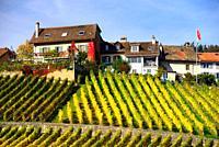 Human settlement in vineyards, autumn October, La Côte wine region, Féchy, Morges district, canton Vaud, Switzerland, Europe