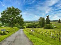 country road, vineyards, and landscape at Saint-Aubin de Cadelech, Dordogne Department, Nouvelle Aquitaine, France.
