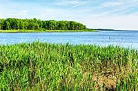 Bay. Scenic summer landscape.