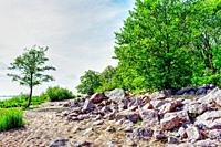 Green trees and stones/ Colourful summer landscape.