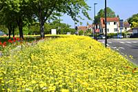 Spring Flowers in Sartrouville, Yvelines, France.