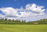 Rural landscape with a barn in a field on the edge of a forest close to the Swedish village Bollnas.