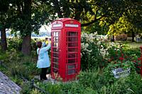 Reinickendorf, Tegel, Berlin, Germany, Europe - A woman takes a photograph of a phased out typical red British public telephone box (K6 model) at a pa...
