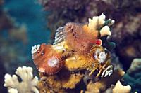 Corals and christmas tree worms in the Caribbean sea around Bonaire. Close-up.