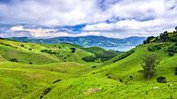 Rolling farmland on the Otago Peninsula, Dunedin, Otago, South Island, New Zealand.