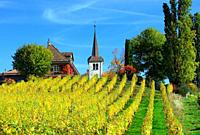 Idyllic countryside landscape, Fechy church in vineyards, Eglise de Fechy , human settlement, Fechy, La Cote , La Cote Vaudoise, Morges district, cant...