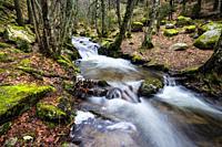 Stream, pines, rocks, birchs and moss in Sierra de Guadarrama. Madrid. Spain. Europe.