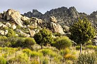 Path, granite rocks, pines and cistus in Sierra Cabrera. Madrid. Spain. Europe.